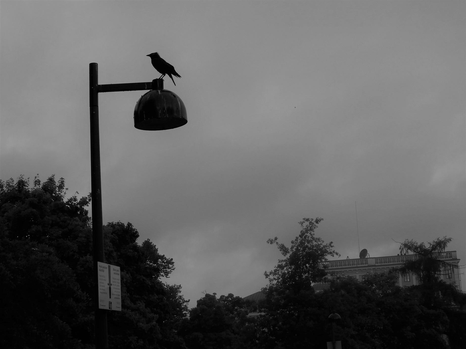 Nimi: Lintu lampulla, Kuvaaja: Tarja Kaltiomaa