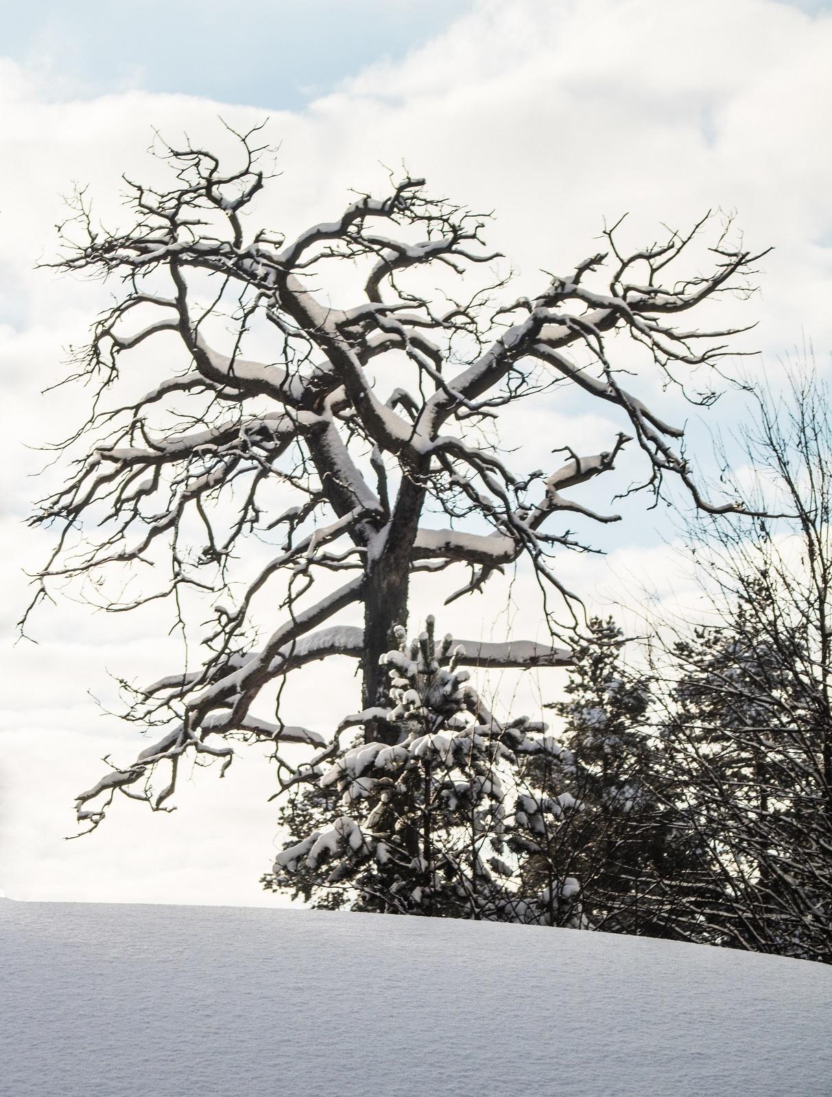 Nimi: Talvi1, Kuvaaja: Kari Heino