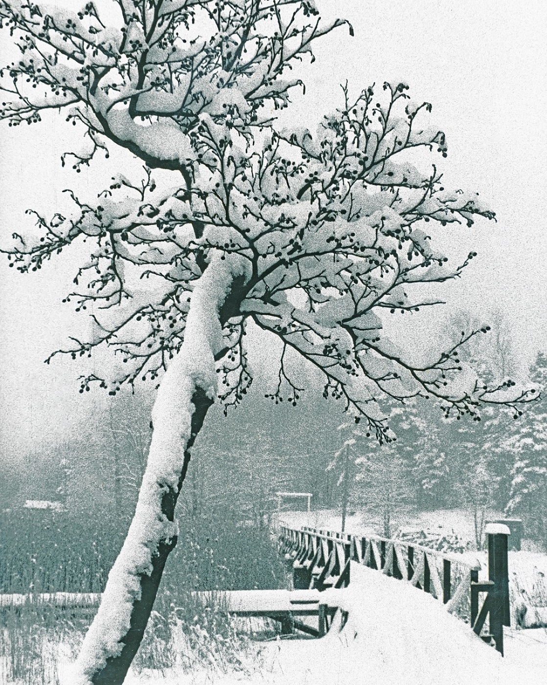Nimi: Talvi2, Kuvaaja: Kari Heino