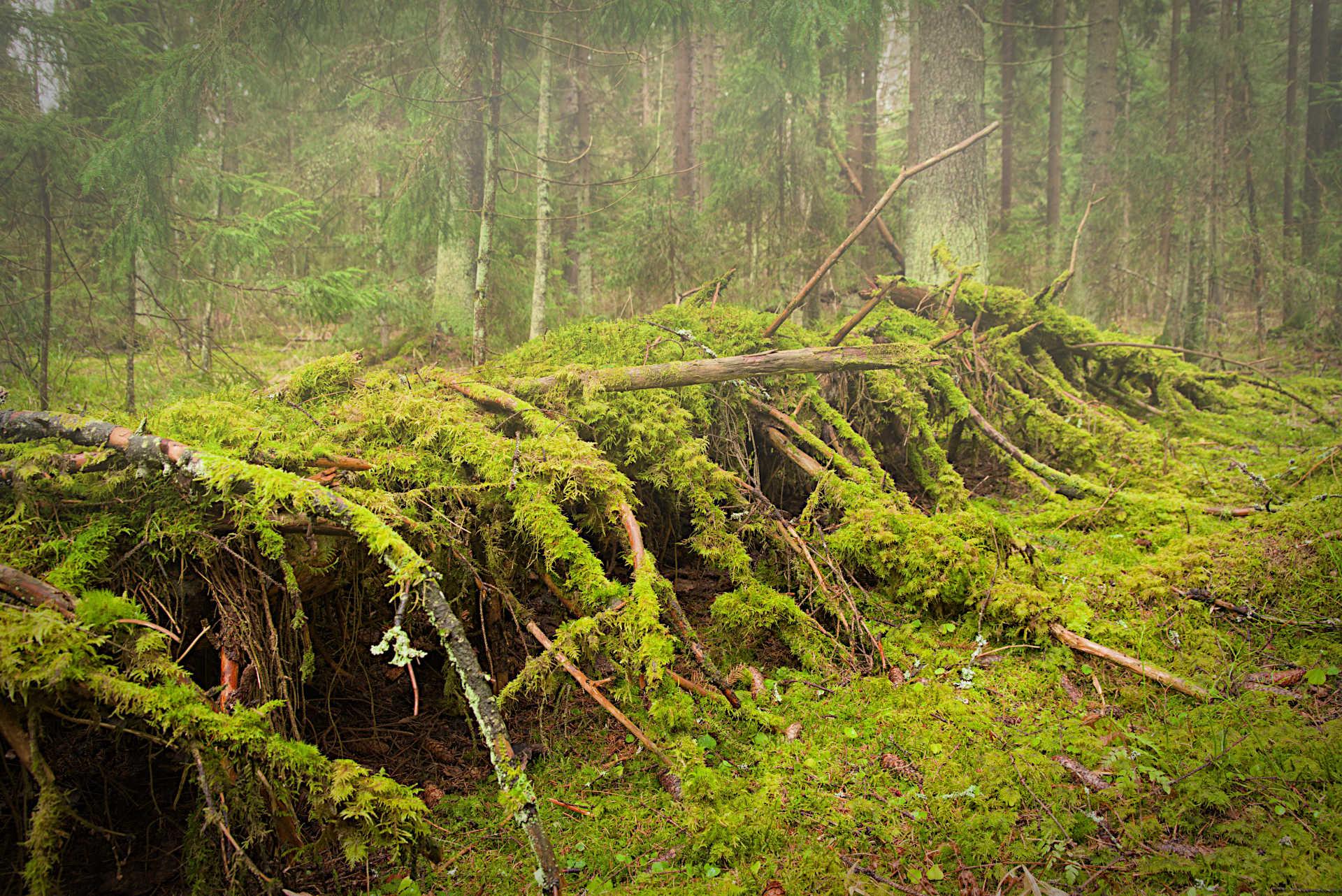 Nimi: Metsässä, Kuvaaja: Markku Ylilammi