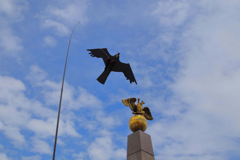 Nimi: Torin linnut, Kuvaaja: Jarmo Frii