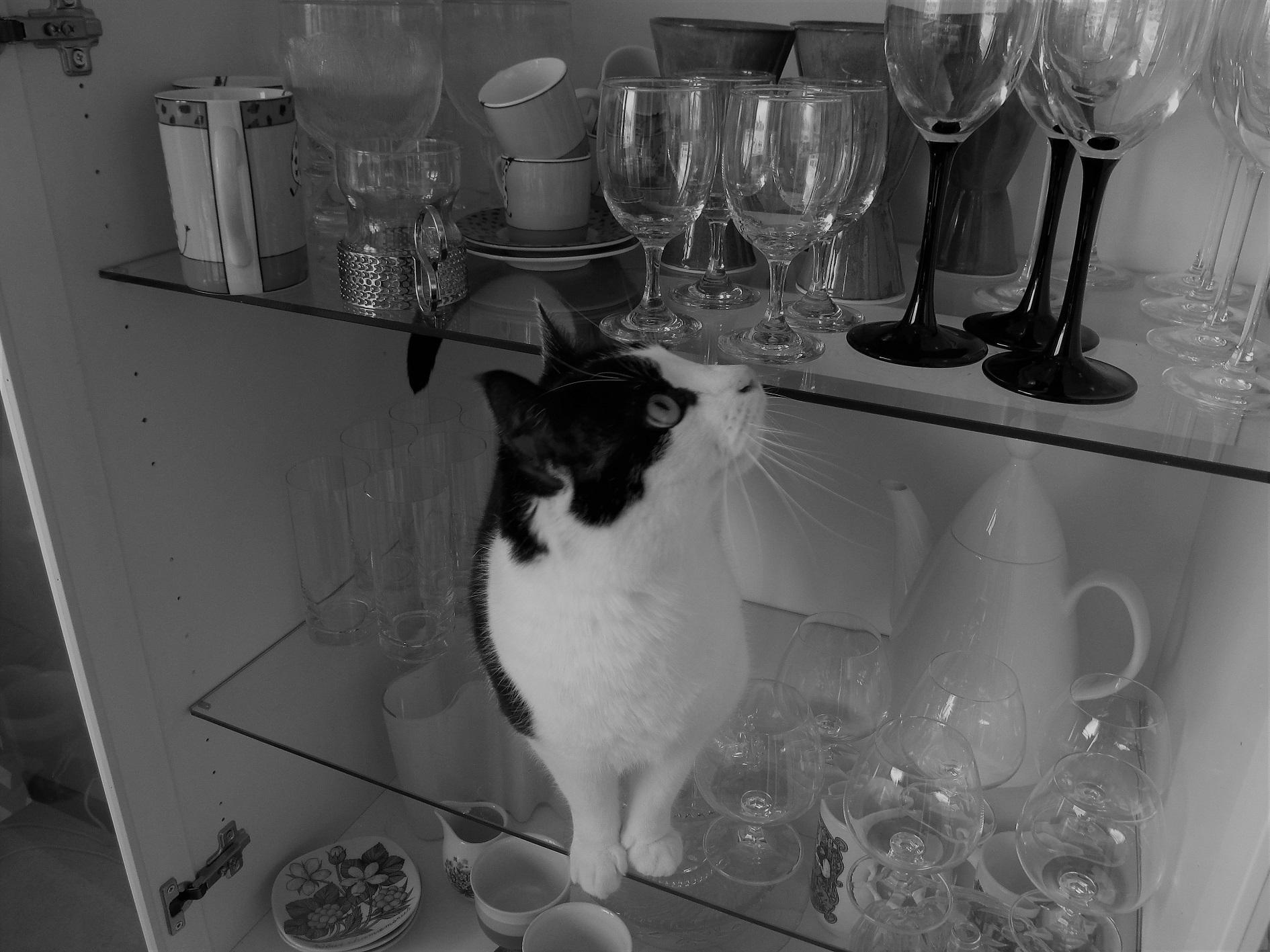 Nimi: Kissa lasikaapissa mv, Kuvaaja: Tarja Kaltiomaa
