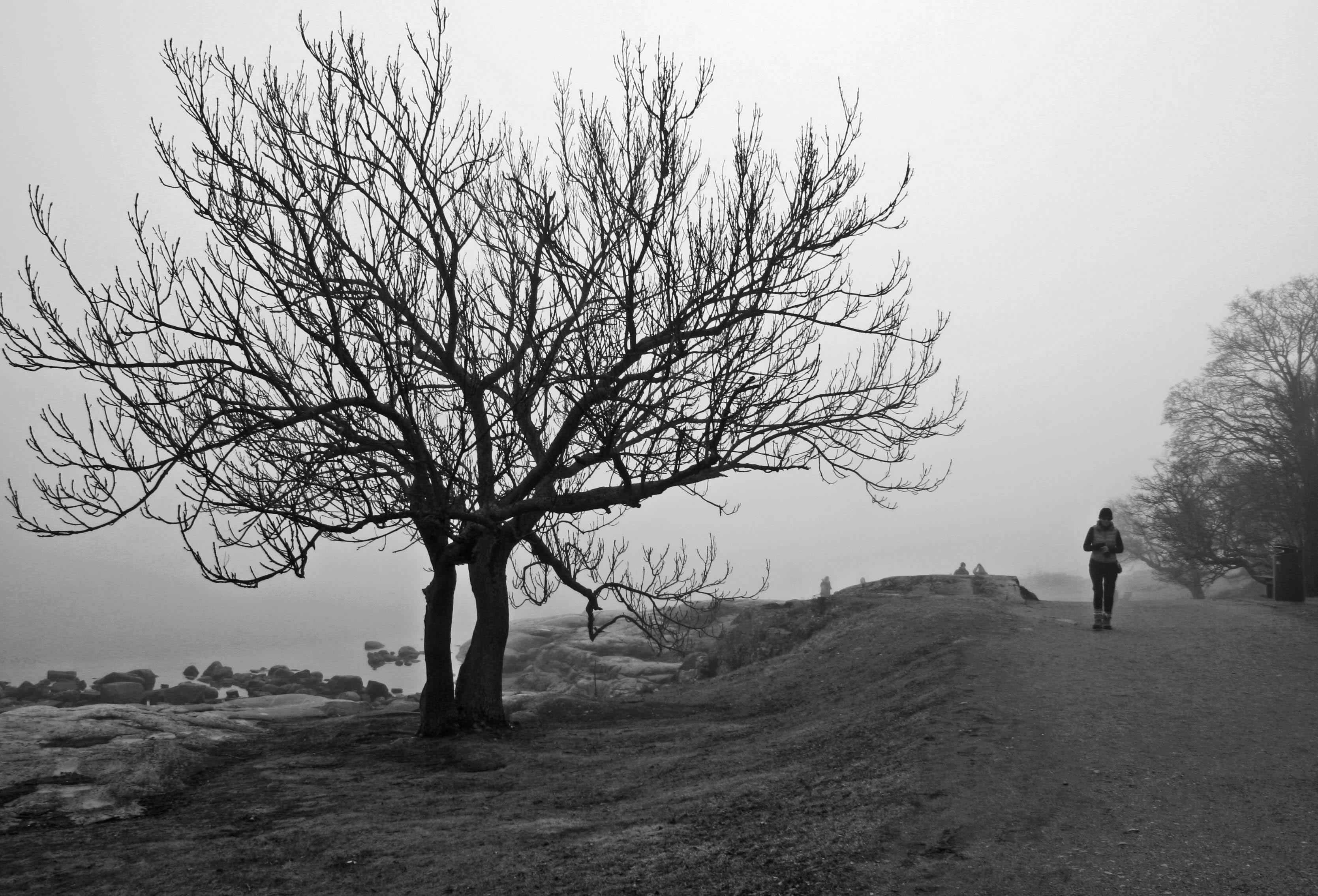 Nimi: Kävelyllä, Kuvaaja: Kari Heino