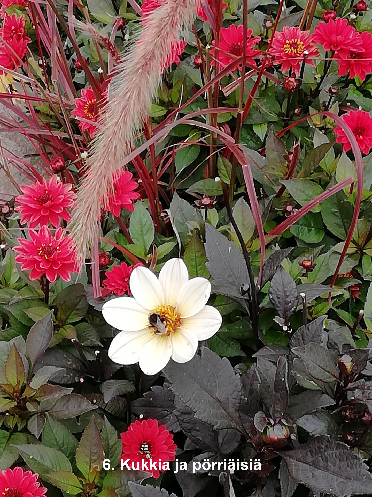 Nimi: Kukkia ja pörriäisiä, Kuvaaja: Pöytäkilpailu