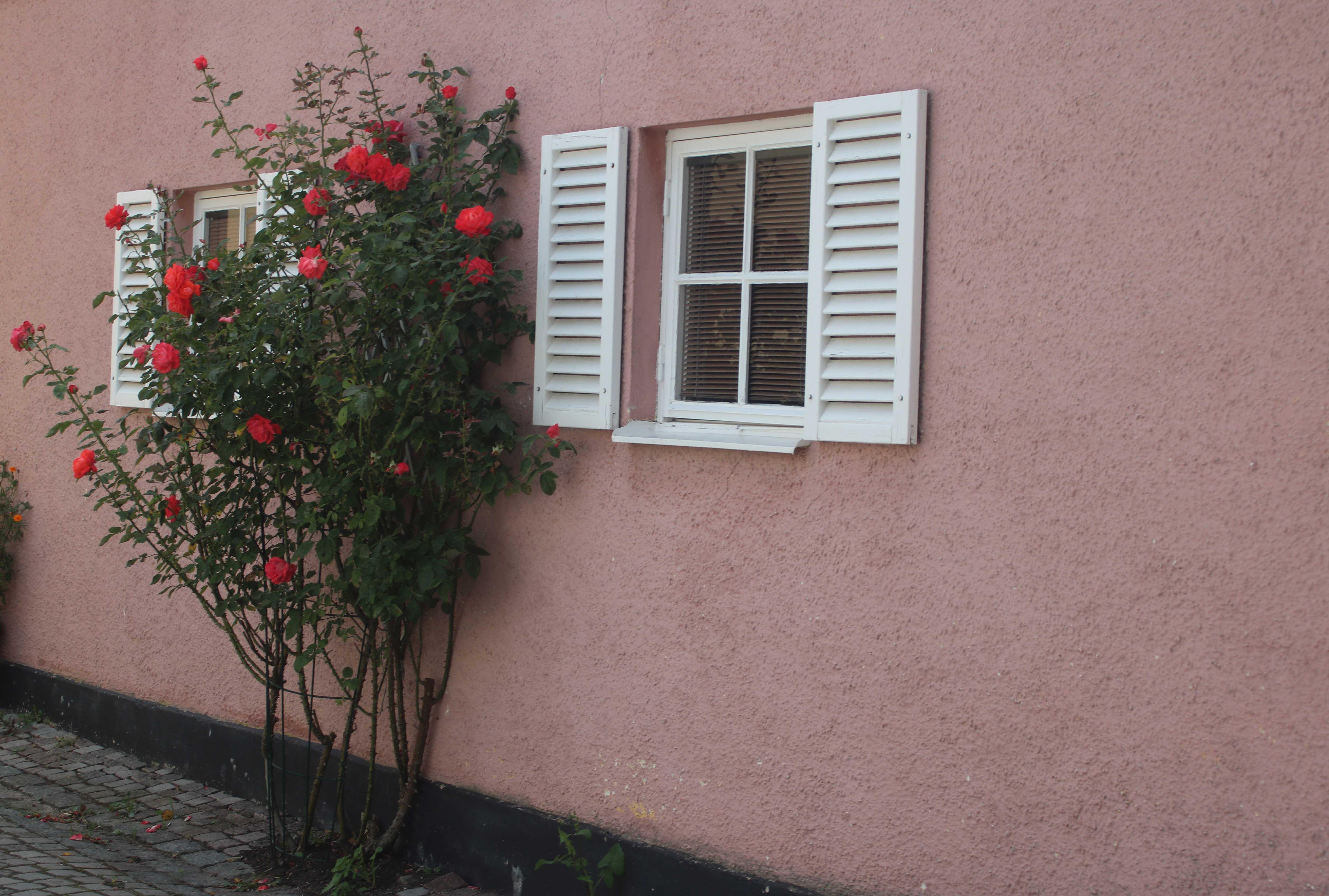 Nimi: Ruusuinen seinä, Kuvaaja: Kari Heino
